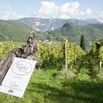 Il Sommelier Magazine Fisar Venezia: serata on-line con i vini biodinamici altoatesini della Tenuta Tröpfltal